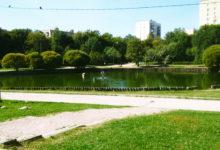 О поддержке Комитетом «Нация и Свобода» защитников парка «Дубки»